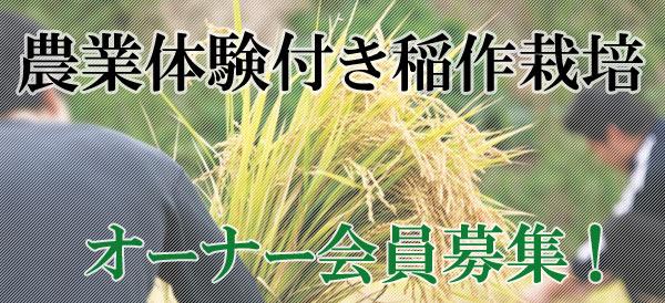 農業体験付き稲作栽培オーナー会員募集