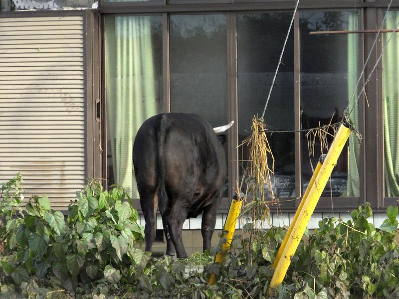 家畜にも命の危険が